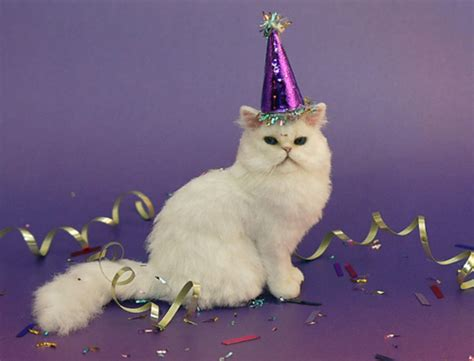new year animal birthday birthday animals on birthday cats cat
