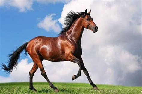 Dan Kegunaan Sho Kuda manfaat kuda