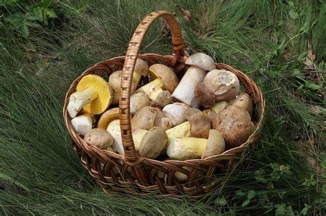 hati hati  jamur  memang terlihat cantik tapi