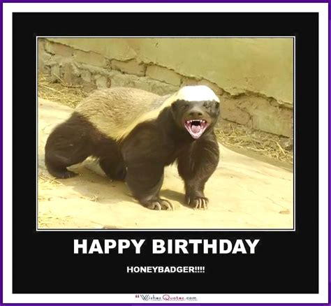 funny happy birthday meme animal www imgkid com the