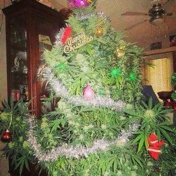 pot plant christmas altar cannabis tree my