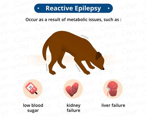 epilepsy in dogs signs symptoms treatment canna pet