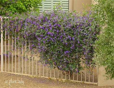 Landscaping Ideas Zone 8a 412 Best Images About Xeriscape Front Yard Zone 8a On