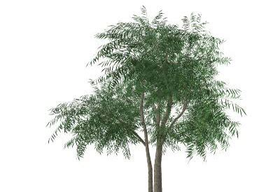 sketchup components 3d warehouse plants willow tree