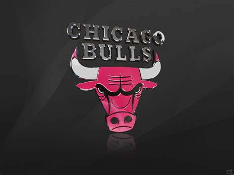 cikaso bulls chicago bulls photo