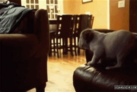 dog jumping on couch funny gif dog jumping couch fall 171 the mock dock