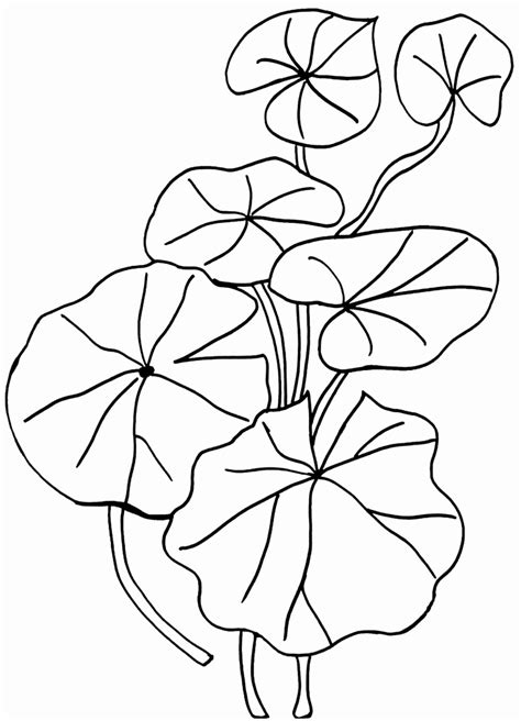 coloring pages exles 9 printable lily pad template cttuw templatesz234
