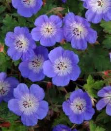 easy summer flowering shade plants