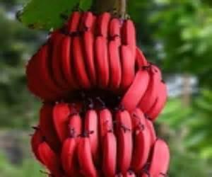 fruits veggies bananas plantains defeat diabetes foundation