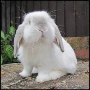 rabbit bunny bunny rabbits images bunny hd wallpaper and background photos 30657065