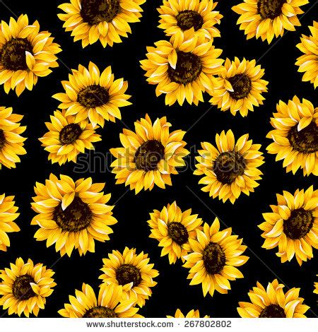 sunflower pattern tumblr sunflowers picture stock photos images pictures