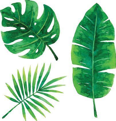 vector illustration of tropical plants leaf art