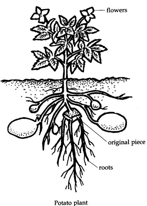 Activity 23: An Eye for an... Plant???
