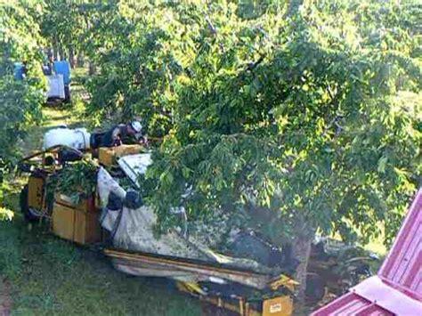 dawson v cherry tree machine cherry harvest in michigan