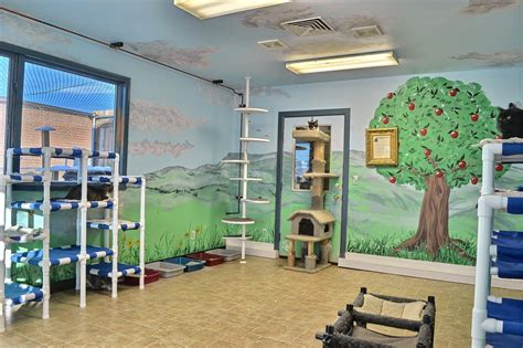 room free free roam room park county animal shelter