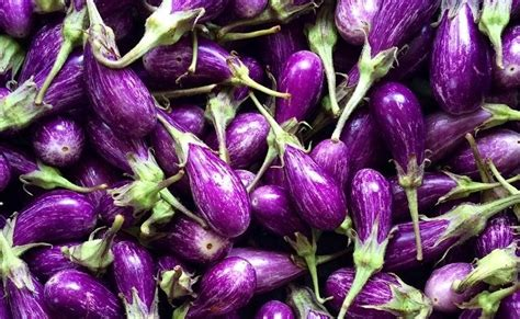 five health benefits of the humble eggplant the
