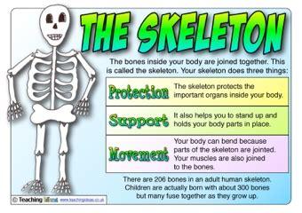 Primary Explorers Human the skeleton poster teaching ideas