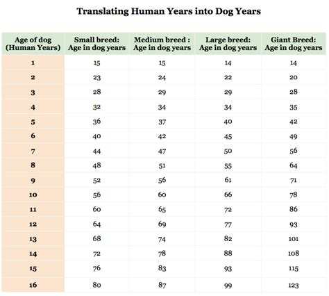 years to human years the mythology of years