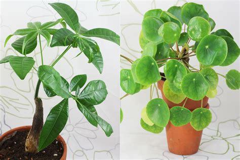 Als Zimmerpflanze by Zimmerpflanzen Pflege