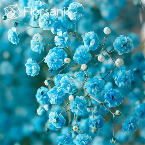 Home Decorators Coupon 10 Off by Sky Blue Tinted Baby S Breath