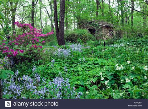 Garden Forest by Triyae Backyard Forest Garden Various 28 Images Our