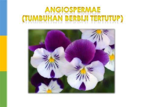 presentasi biologi spermatopita tumbuhan berbiji   sman