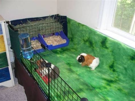 guinea pig bedding ideas 95 best guinea pig cage toy ideas exles images on