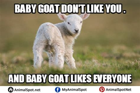 Goat Meme - baby goat meme www pixshark com images galleries with