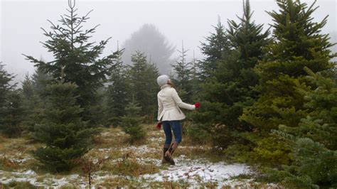 how to plant christmas tree farm five surprising ways your tree can give back after the holidays cool green science
