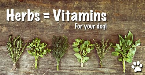 herbs for dogs vitamin rich herbs for your pets dogs naturally magazine