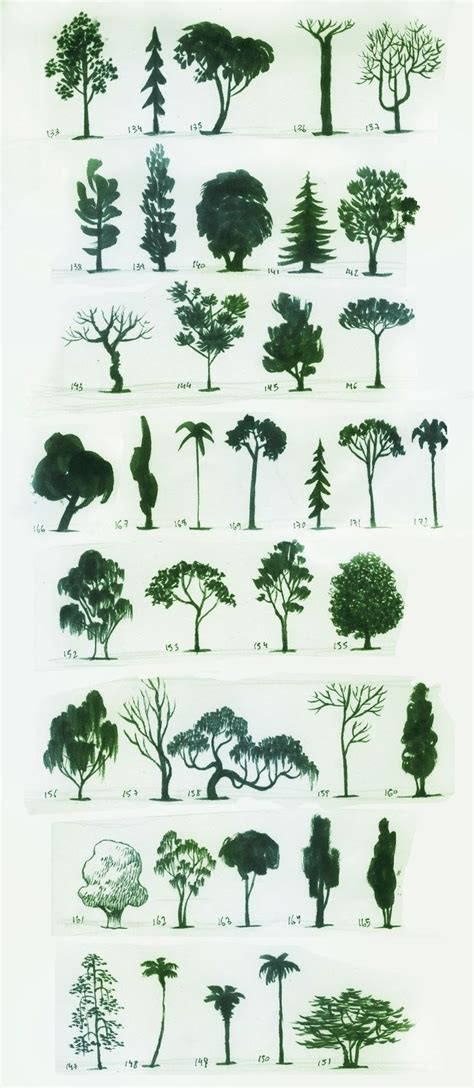 type of trees different types of trees drawings www imgkid com the