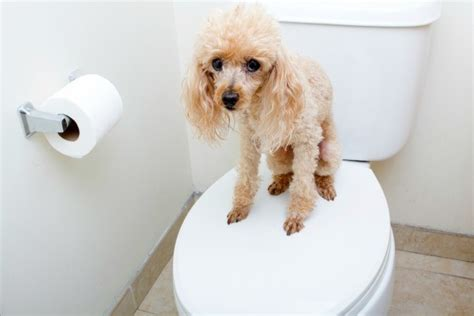 how to go to the bathroom with a ton in new dog not going to the bathroom thriftyfun
