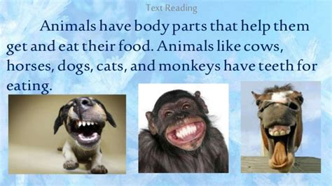 how to get dogs and cats to get along 2nd qtr 2 how animals get eat their food using certain