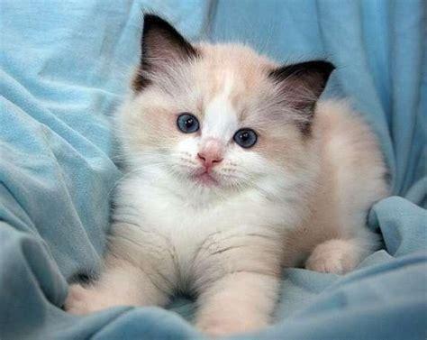 imagenes para pc tiernas 30 im 225 genes divertidas de gatitos tiernos para fondos de