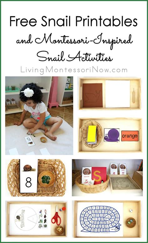 printable montessori activities free snail printables and montessori inspired snail