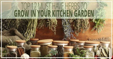 grow herbs in kitchen top 12 must have herbs to grow in your kitchen garden all natural home and beauty jpg