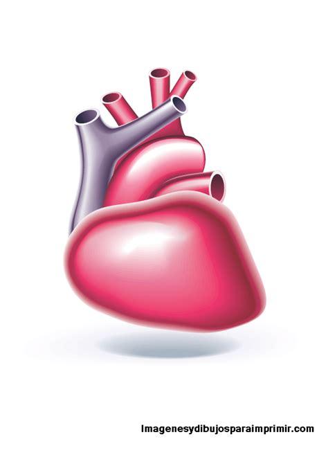 imagenes de corazones organo organos cuerpo humano para imprimir