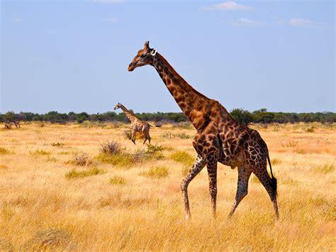 wild side  etosha national park namibia africa