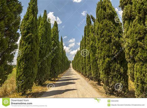 camino toscano camino con los cipreses en toscana imagen de archivo