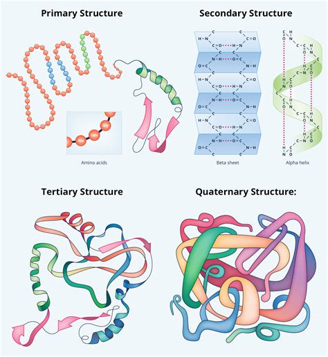 protein quiz biology protein structure quiz all articles about