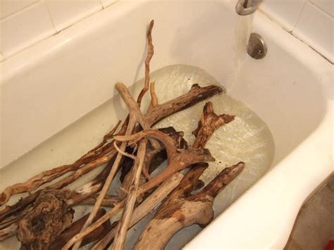 driftwood craft projects best 25 vivarium ideas on plant fish tank