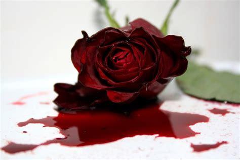 imagenes rosas sangrando the dying rose by janina photography on deviantart