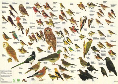 Kleine Vögel Im Garten