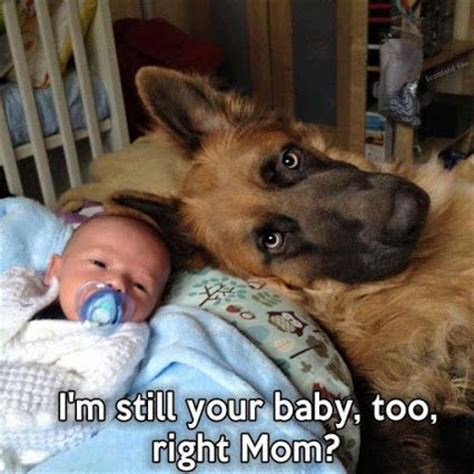 Dog Mom Meme - new babies mom and awesome on pinterest