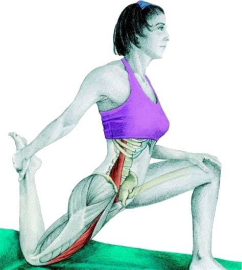 Half Hip 34 Stretches To Stay And Healthy With Pictures