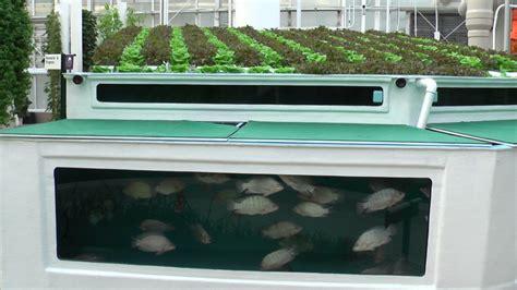 Backyard Growers You Need To See How Fish Help Grow Better Weed