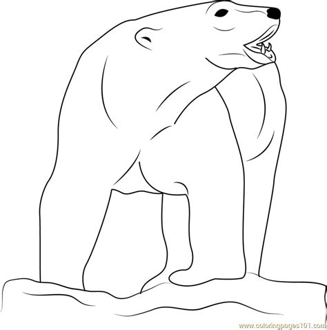 bear coloring pages pdf angry polar bear coloring page free bear coloring pages