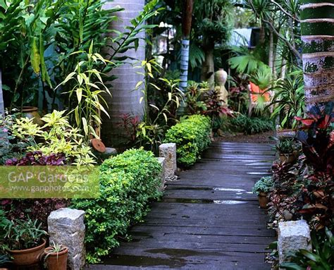 gap gardens tropical garden with timber boardwalk path image no 0055723 photo by leigh clapp