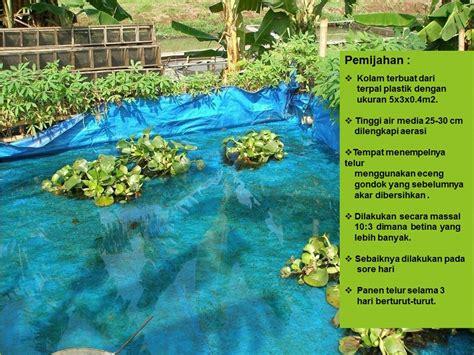 Lu Hias Ikan komunitas penyuluh perikanan budidaya ikan hias rainbow merah