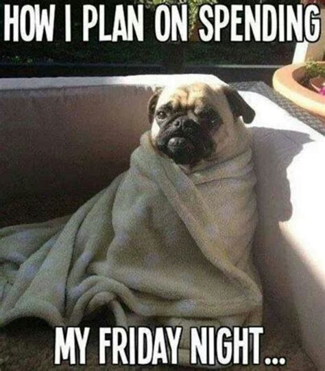 Friday Night Meme - pet meme mania
